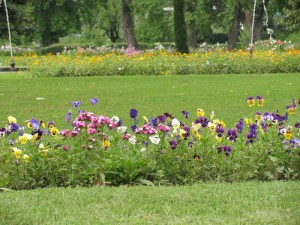 Another pic from Mughal garden.