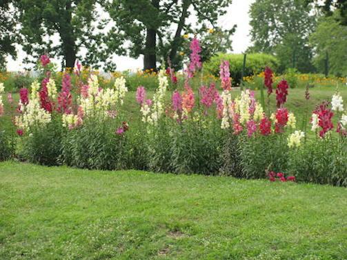 mughal garden sringr